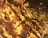 Мини-лазанья с фаршем (Рецепт итальянских конвертиков), пошаговый рецепт с фото